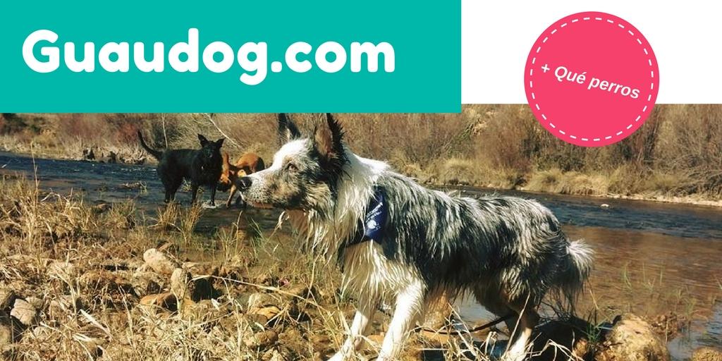 ✅Hola perrunos conoceis mi NUEVO BLOG🐶 pasaros a visitarlo si os gustá el mundo canino.⚽ http://mtr.cool/sylbclnmvx #dogs #perros #educacioncanina #pets #adiestramientocanino