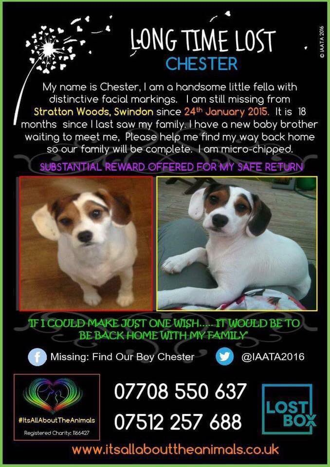 Sharing in hope of finding this #missingdog #StrattonWoods #Swindon #Wiltshire 24.01.15 #HelpFindChester please share #pets