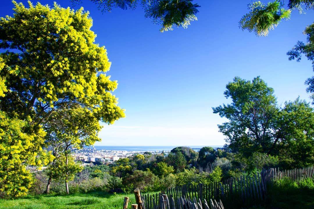 [Parcours Instagram #InstaCannes]  A la découverte des lieux les + instagramables de #Cannes, aujourd'hui >> La Croix des Gardes à la saison des mimosas  <<  En ce moment, à la floraison des mimosas, le parc revêt une couleur jaune vive unique. http://bit.ly/ParcoursInstaCannes…pic.twitter.com/Gl7R3EmqWN