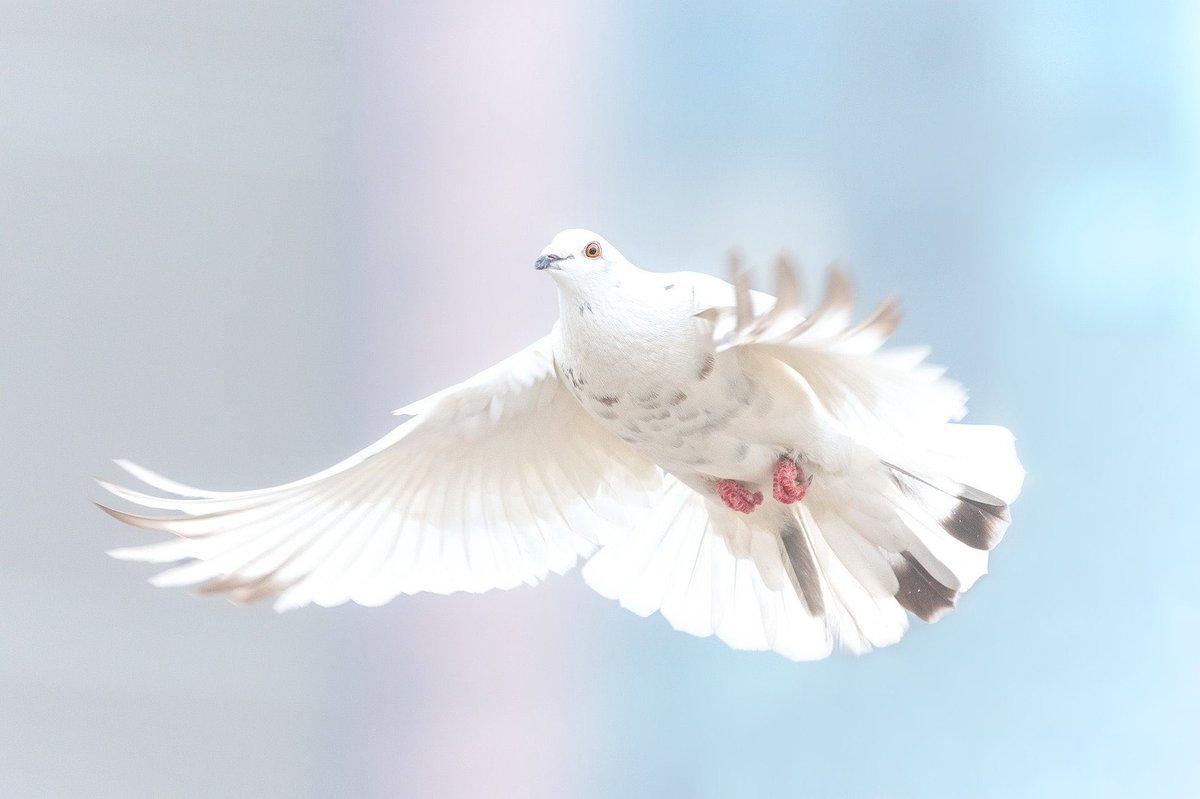 In Zeiten der #Unruhen rund um die Welt ist es wichtiger denn je, im Kreis des Privaten zusammen zu halten. Indem sich jede/-r einzelne um ein friedliches Miteinander bemüht, ist es so jedem Menschen möglich, ein kleines bisschen #Frieden in die #Welt hinaus zu tragen.  #bdkjmufpic.twitter.com/5F2kmeeAvI