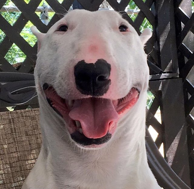 @Yassuo Get a bull terrier and name him Walter
