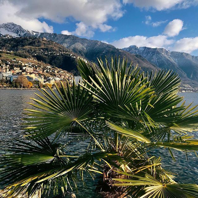 *** Montreux *** #lacleman#montreux #genfersee #myswitzerland #inlovewithswitzerland #visitswitzerland #letsgosomewhere #discoverearth #natureaddict #naturelovers #thewanderco #blickheimat #ourplanetdaily #landscapephotography #neverstopexploring #dis… https://ift.tt/2R8uwcGpic.twitter.com/LpdOzy66p4