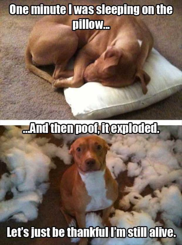 #Dogs, you can't help but love them, thats why everyone loves them, despite judging them. #DontJudge #AdoptDontJudgepic.twitter.com/eCqKn5ZIEA