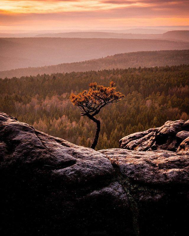 einsam . . . . . #germany #saxony  #urbex #artofvisuals #dresden #simplysaxony #igdaily #shootwithcamerasnotwithguns #naturelover #winter #landscape #naturephotography #ig_saxony #ig_deutschland #touch #of #gold #sichtfotomag #mietdeinobjek… https://ift.tt/2v7f7RBpic.twitter.com/x84UN1B85W