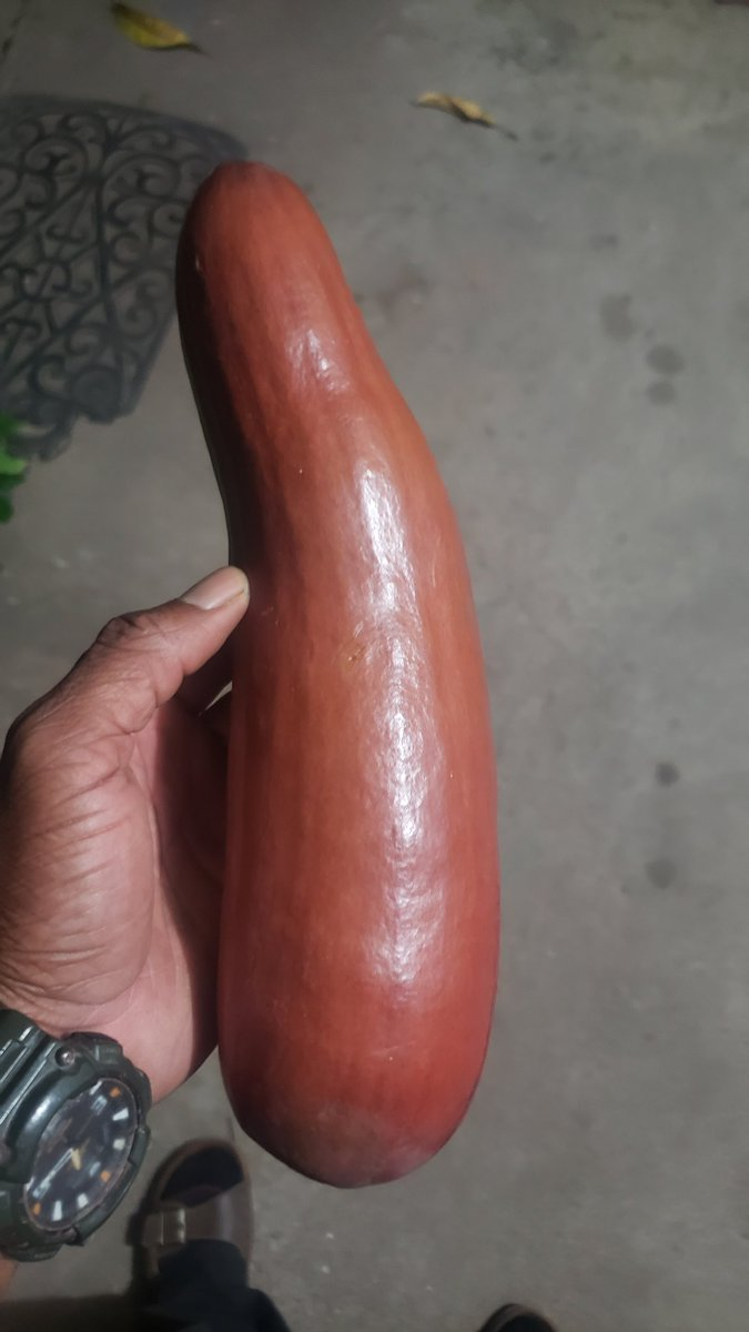 """I bought this fruit or vegetable in Porus Today. It look like a squash. I was told that you boil it first and then cook it up with sailfish. The guy told me the name. It starts with """"P"""" however I forget the name.   I need your help in telling me the name of this fruit."""