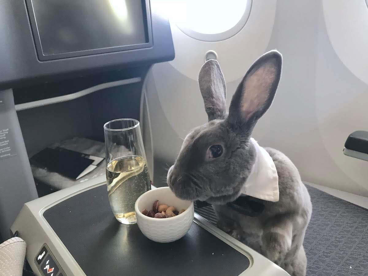 A rabbit got the VIP treatment on an SFO flight to Japan http://dlvr.it/RNMTK2