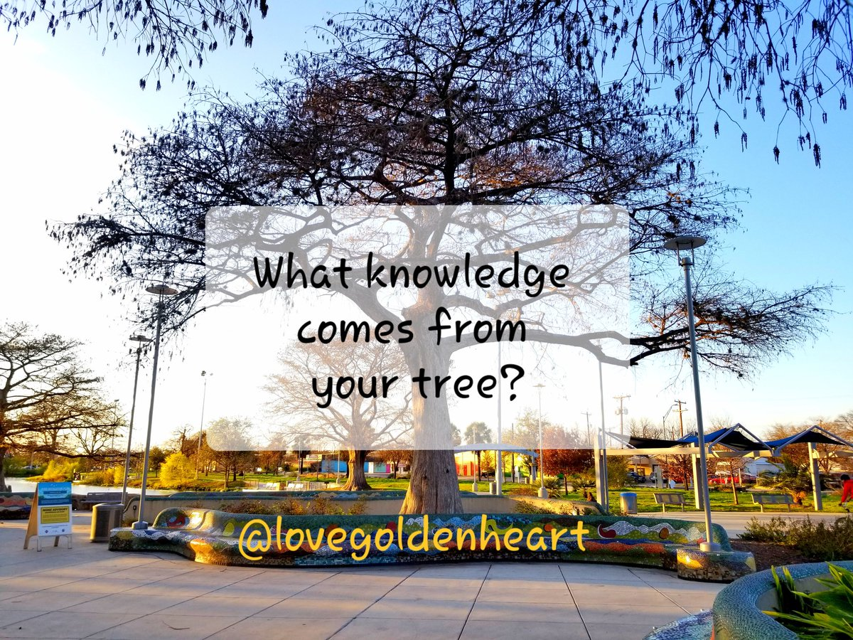 What knowledge comes from your tree? @Wrix2 @saferprint @LoriMoreno @ShenaeChase @1shawnster @Cynthia55678360 @Adventuringgal @TravelBugsWorld @ShanniDBAC @bionicanadian @LavaletteAstrid @1228erin @Hazloe3 @debryan96962349 @DianeLadylaw @IreneWoodbury @BarbaraLoraineN