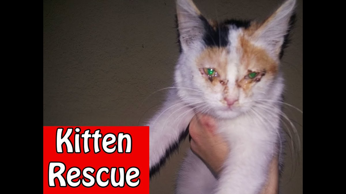 #Kitten #Rescue OPERATION - ...   #Cats #Cat #Kittens #Kitten #Kitty #Pets #Pet #Meow #Moe #CuteCats #CuteCat #CuteKittens #CuteKitten #MeowMoe   #AdorableCats #AdorableKitten #Cat #CatFood #CatRescue #CuteCats #CuteCatsVideos      .