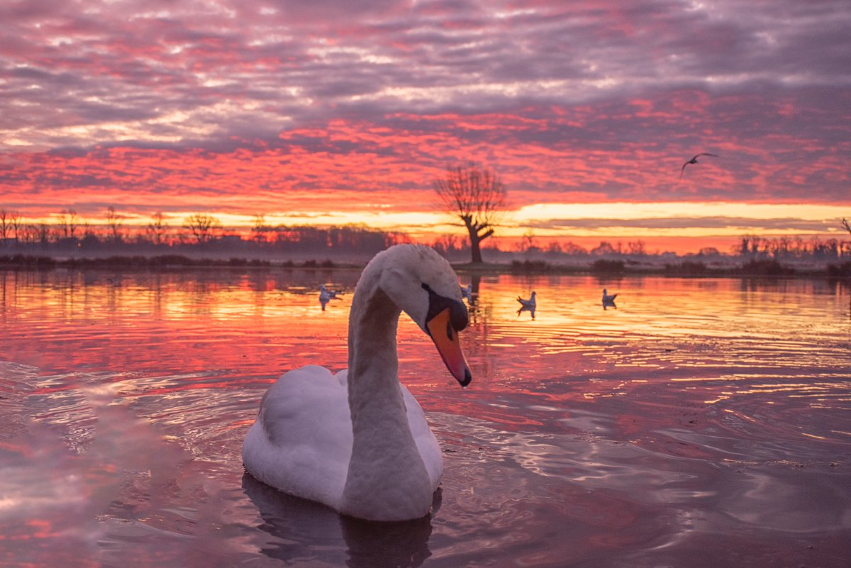A magnificent sunrise and greeting to begin the new week #BushyPark 20/01/2020 @Teddington_Town @LBRUT @visitlondon @Visit_Richmond1 @BBCEarth @earthcapture @theroyalparks @SurreyLife @TWmagazines @ParksforLondon @Natures_Voice @SurreysWildlife @stormhour<br>http://pic.twitter.com/7taodGqwLG