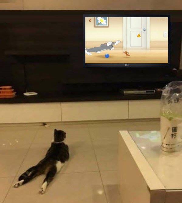 #JrOstin Mi Gato  viendo tutoriales  Como atrapar Ratones pic.twitter.com/53jYJd5uzQ