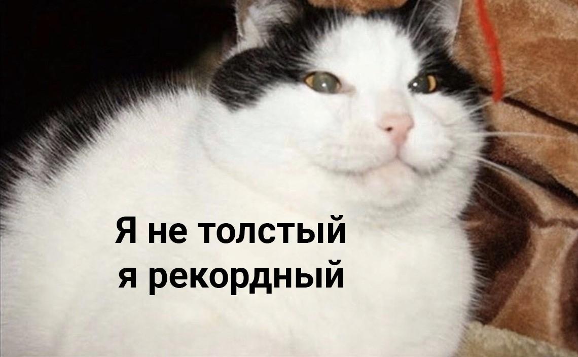 Кот Джекпот и его оправдания: