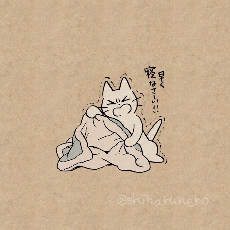 寒い夜になかなか寝ない人を叱ってくれる猫