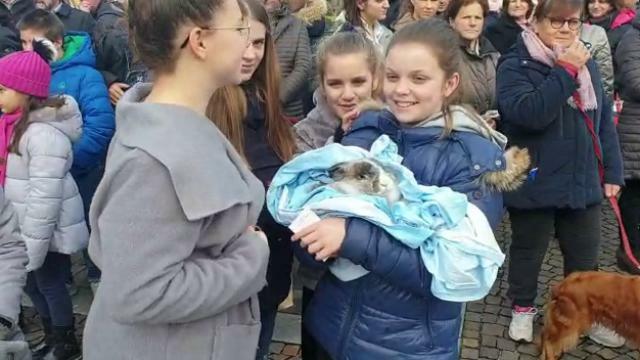 Cani, gatti e conigli: tutti in piazza a Caerano p...