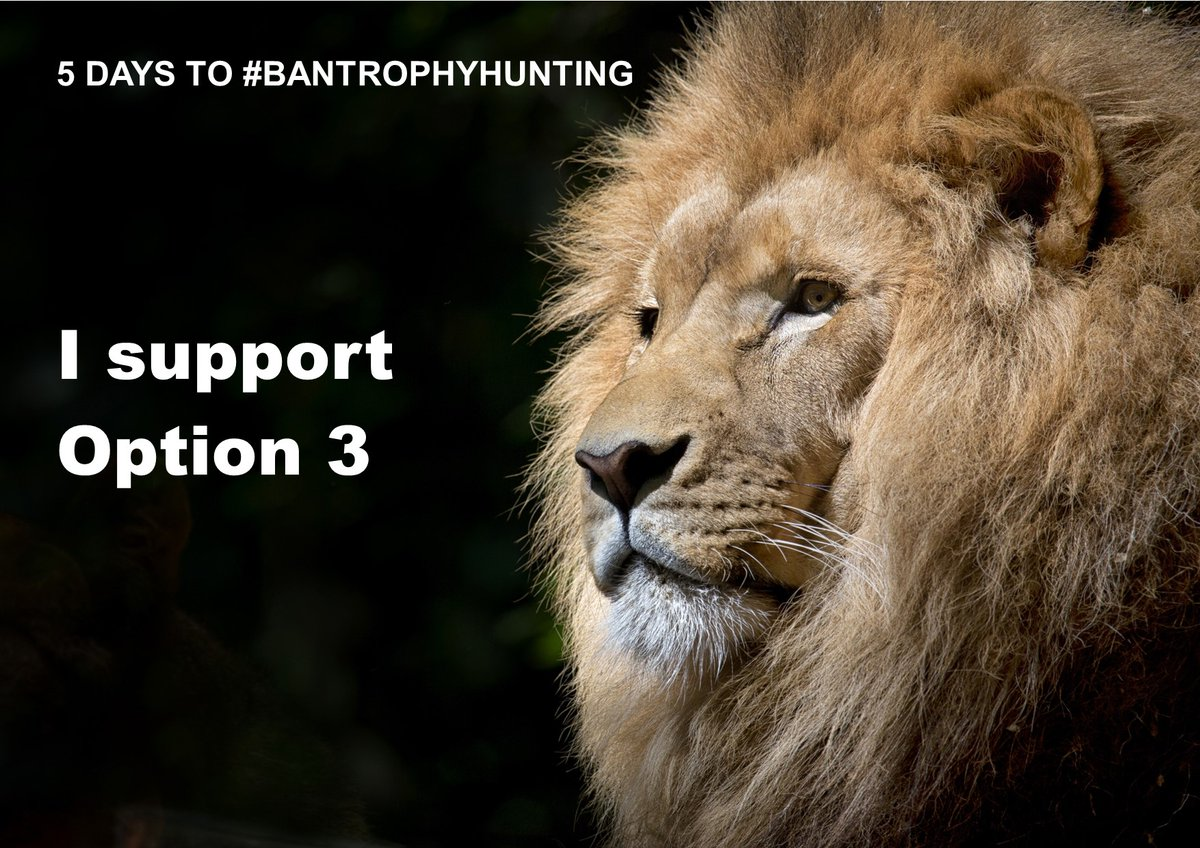 5 DAYS TO HELP #BANTROPHYHUNTING! The Govt's public consultation on trophy hunting laws ENDS SATURDAY Jan 25 Email the Govt TODAY! To: huntingtrophyconsultation@defra.gov.uk subject: Consultation on hunting trophies Message: I support Option 3 - a total ban on hunting trophies
