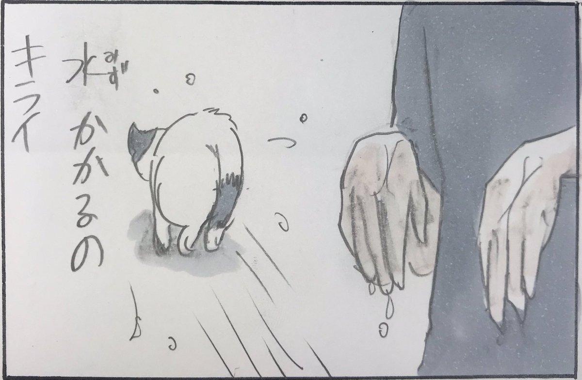 『水と猫の不思議』