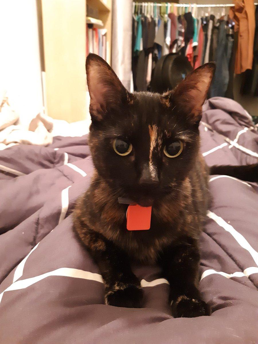 @Mer_Squared's cat aka my new roommate.