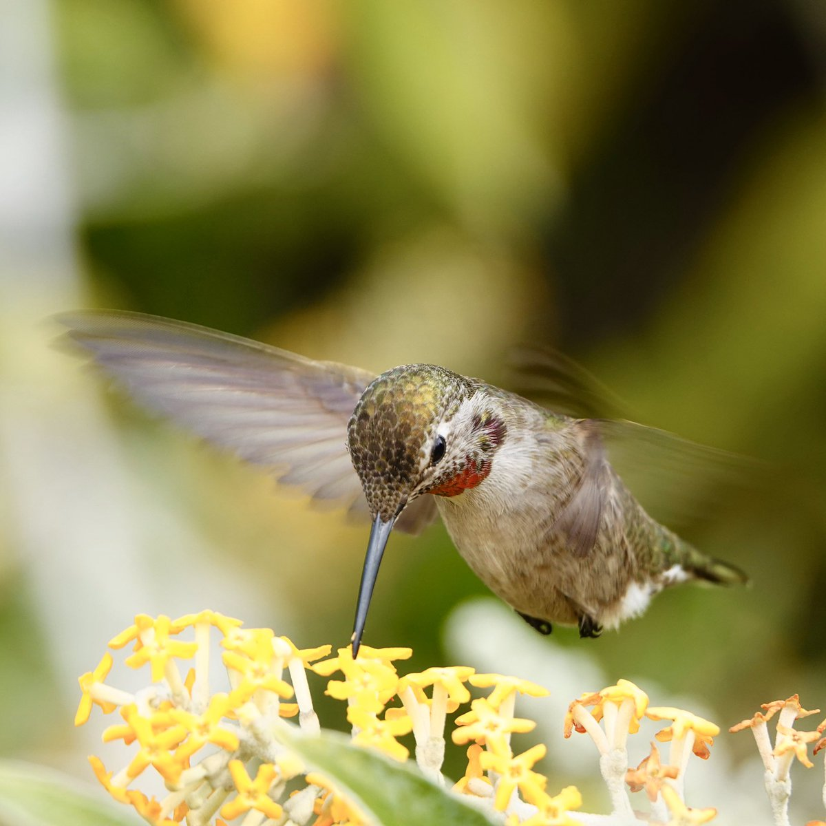 Hi I am a grown man who chases hummingbirds. And I'm okay with that. <br>http://pic.twitter.com/P5H4pEo330
