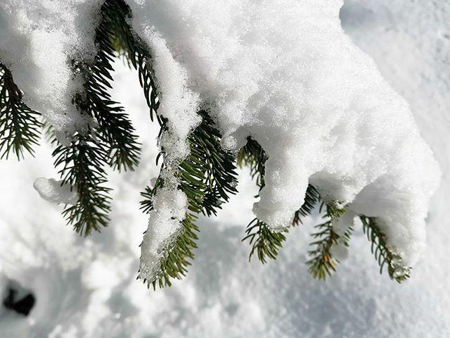 Schneeschuhwandern Arosa, Graubünden, Schweiz  @arosalenzerheide @arosa.inside @arosabergbahnen  #schnee #schneeschuhwandern #snowtrail #arosa #schweiz #switzerland #blickheimat #photooftheday #picoftheday #instacool #huaweimate20pro #mate20pro #lovetrav… http://bit.ly/2ufNcOQpic.twitter.com/nx9zfEm9Dd