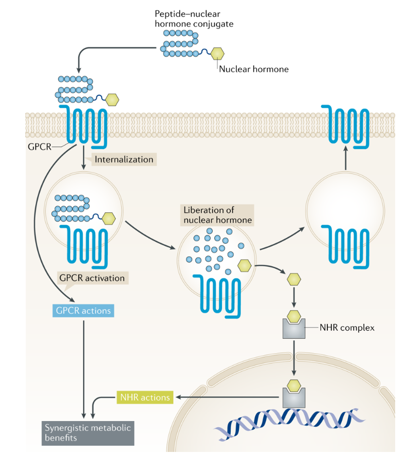 test Twitter Media - Check out this Review on the emerging hormonal-based combination #pharmacotherapies for the treatment of #metabolic diseases (£) https://t.co/GDkaiyUNca #obesity #diabetes https://t.co/F3P0k0WHUS