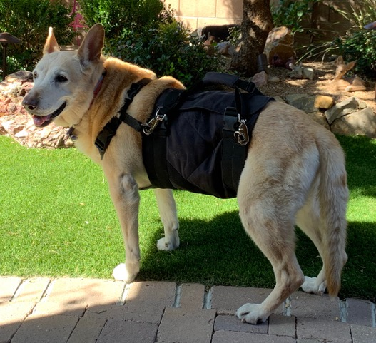 "The custom Support Suit provides unbeatable support and control, to help you help your pet. Save $20 when you order using #PromoCode ""SENIORDOG"" at http://petsupportsuit.com   #TPLO #CCL #Arthritis #Amputation #Veterinary #Surgery #DogHarness #Tripod #HandicappedPets #SeniorDog pic.twitter.com/10qYZ8Ndsx"