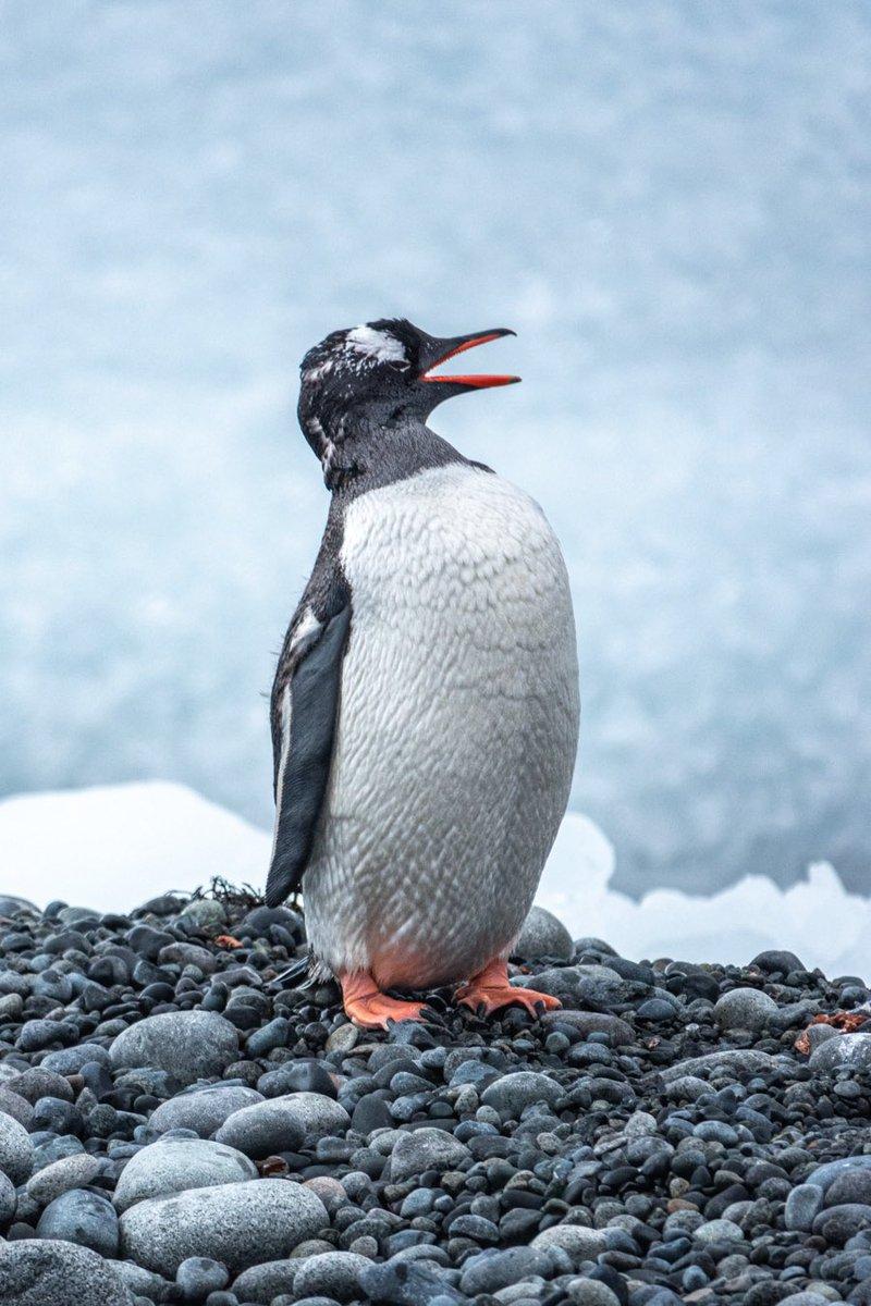#PenguinAwarenessDay
