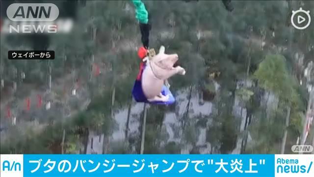 【高さ68m】バンジージャンプ開業記念に豚が宙舞う、非難相次ぐ 中国縛り上げられ、悲鳴を上げながらなすすべなく飛んだ。主催側は「去年の干支を飛ばして新年を迎える」意図だったという。