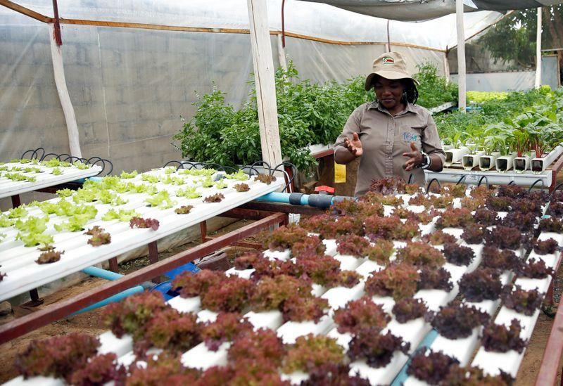 In Zimbabwe, a backyard hydroponic farm beats drought to grow veg https://reut.rs/2G8L4va