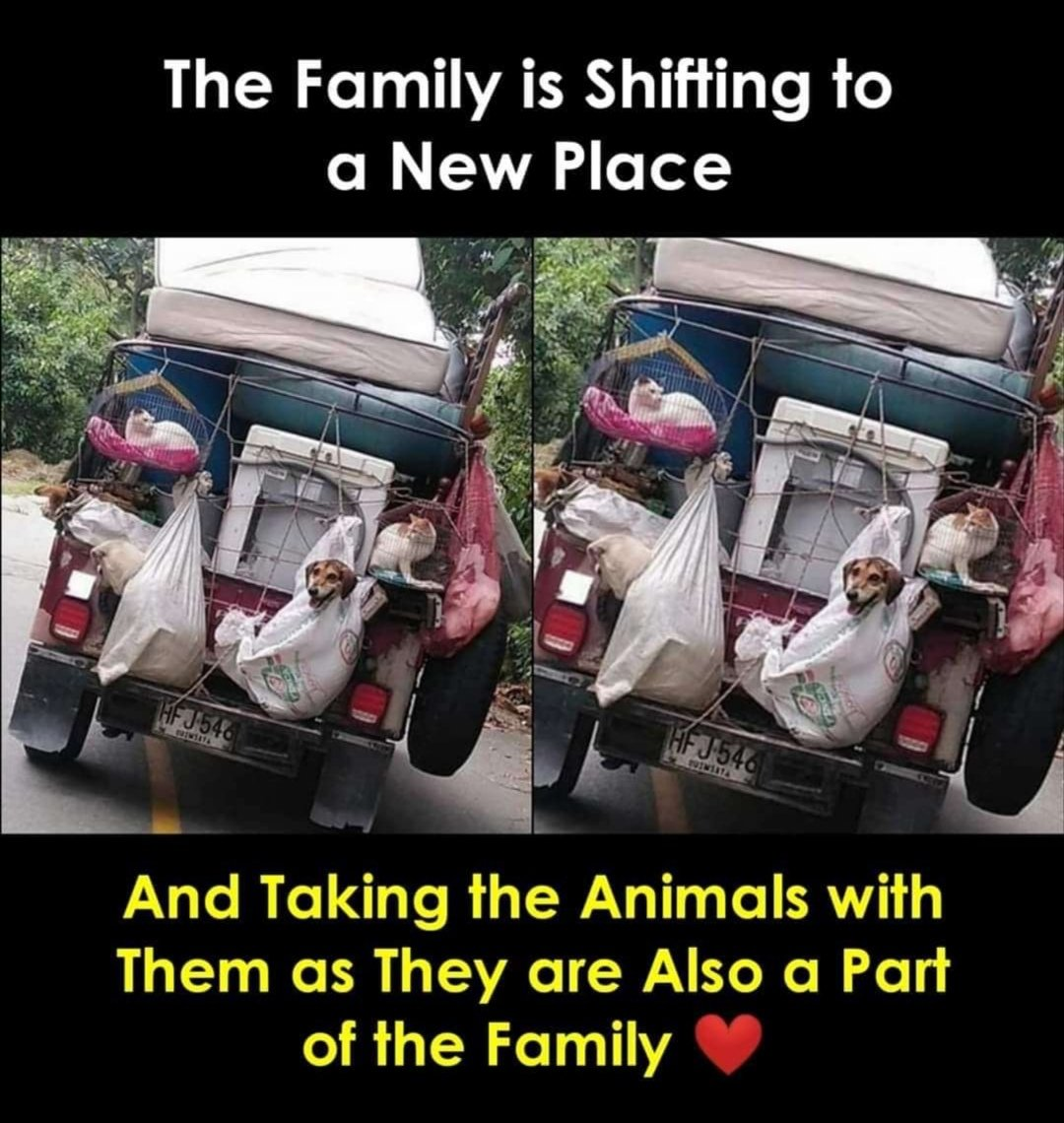 If some people are bad then Good people also exist! #animallovers #trending #tweet