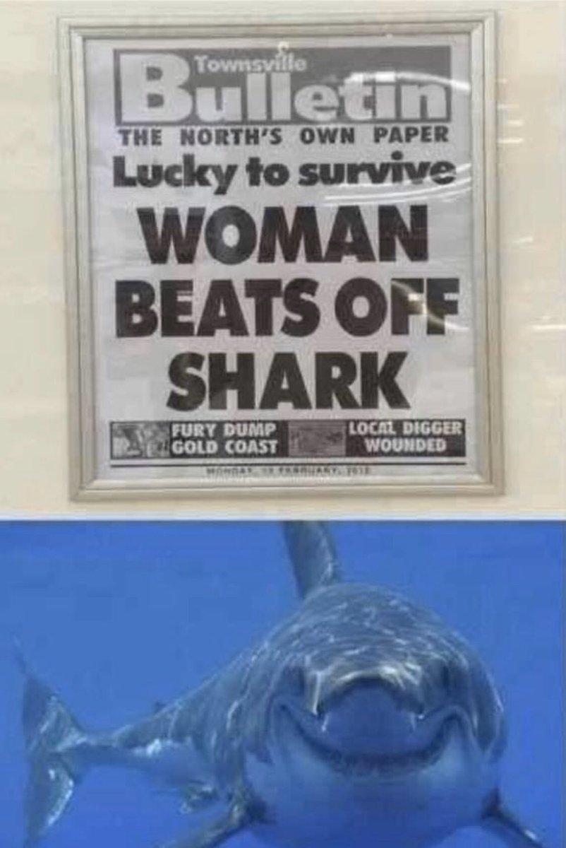 Happy shark haha  #funny #Memes #meme #MondayMotivation #Twitter #photooftheday #picoftheday #picture #hilarious #shark #fishing #fisherman #USA #America #trending #viral #TREASURE #TrendingNow