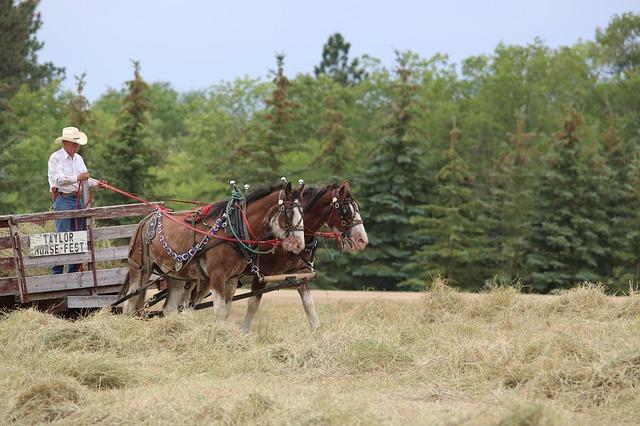#North Dakota photo by jmrockeman @Pixabay  #horses #wagon #cart #photo #photography #beautiful #travelphotography #travelphoto #pic