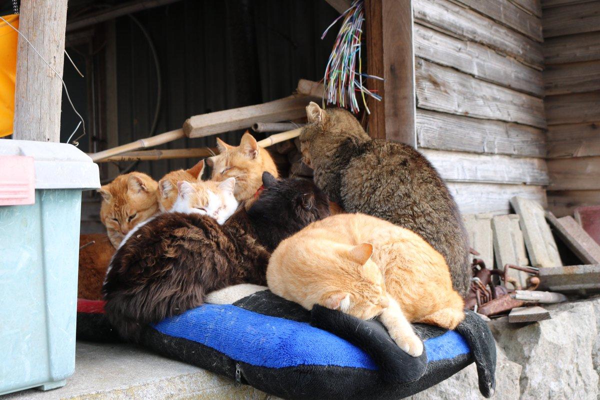 仲間と一緒に猫団子。 次々に猫たちが集まってきます。 お互いの体を温めています。