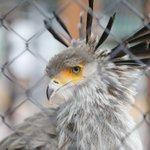名前からは想像つかない美しき鳥、ヘビクイワシをご存知ですか?
