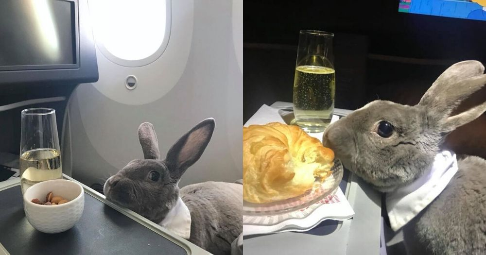 CEO's pet rabbit flew business class from San Francisco to Japan http://bit.ly/36exEItpic.twitter.com/BNVeaTMApe