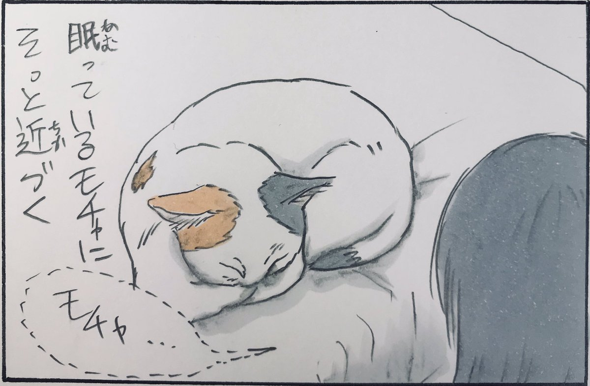『こみ上げる猫愛』
