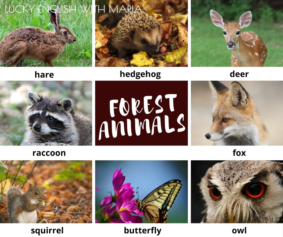 Forest animals with their names #LEarnEnglish Have you ever seen any of these animals? Do they live near you? #FelizMartes <br>http://pic.twitter.com/7ogFgaO8R8