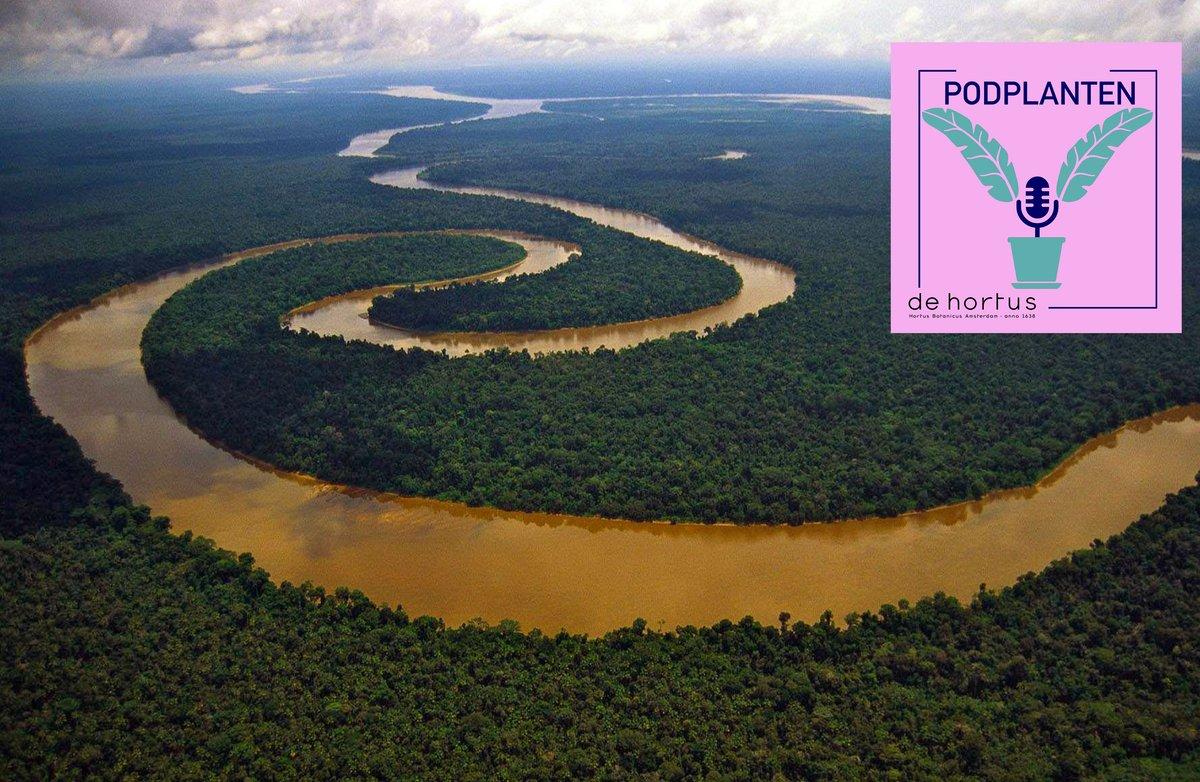 Podcast time! Over de Amazone. Zijn dit nou echt de longen van de aarde? En hoe erg is een brandend bos? met Amazone-onderzoeker @bartkruijt van de @WUR   https://t.co/AZreq0uyqm https://t.co/ZpDpYkReha