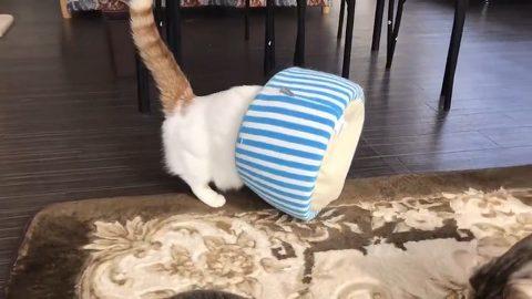 猫ベッドに横乗り→ベッドが倒れてジャストフィット 猫ちゃんが手品のようなベッドインを披露 https://nlab.itmedia.co.jp/nl/articles/2001/21/news039.html… @itm_nlabさんから