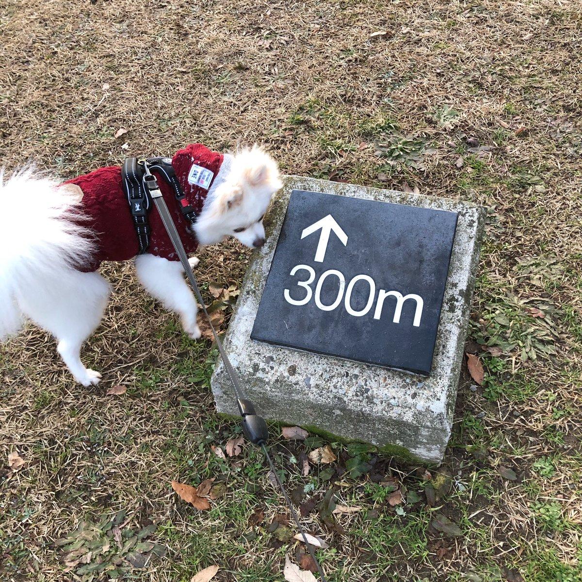 なんやこれ? やけに四角いし、なんか時書いてるし‥矢印の先になんかあるんやろか??? #散歩 #気になる #pomeranian #dog #ポメラニアン #コタロー #犬  #親バカ部