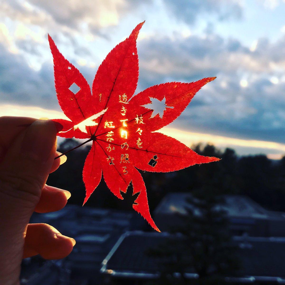 修学旅行で拾った紅葉の葉っぱに和歌を刻みつけた作品。まずこんな綺麗な紅葉が手に入ったのが奇跡だし、京都から東京まで保ったのも奇跡。切る時もすぐ萎れるから15分毎に水につけなくちゃいけなくて大変だった....今から思うとよく失敗せずに切れたなぁ #神が降りてきたと思った自賛工作#切り絵