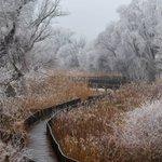 Image for the Tweet beginning: Nature park Kopački rit by