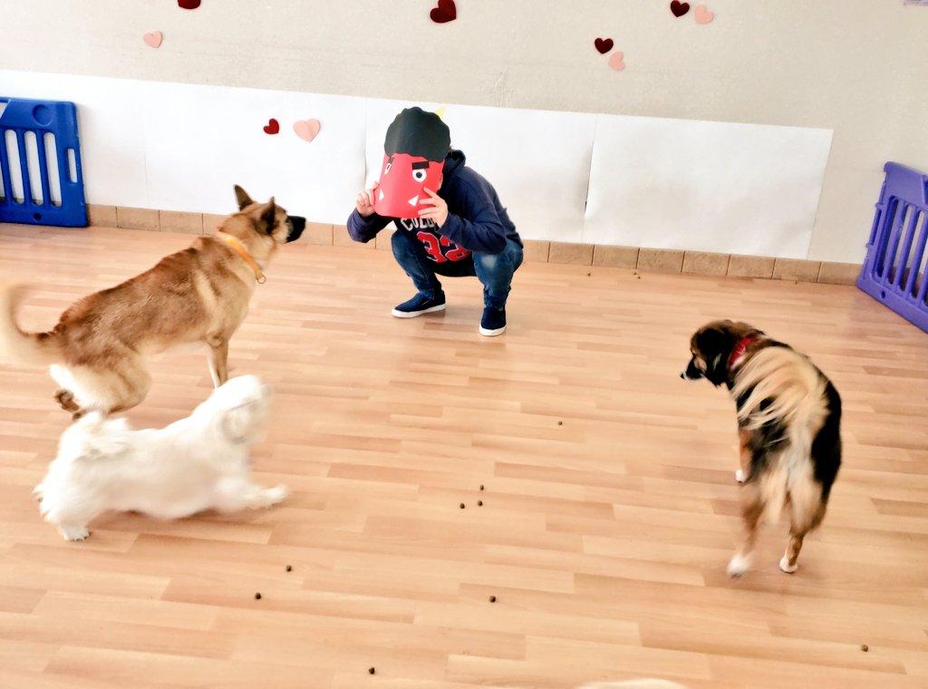 節分の日 PFLJにも鬼が!? 最初は皆びっくりしていましたが、鬼さんからおやつをもらえたり、ふれあいをして仲良しになれていました  楽しく色々な体験をする社会化に取り組んでいます  #PFLJ  #ペッツ・フォー・ライフ・ジャパン #節分の日  #保護 #社会化 #犬の保育園 pic.twitter.com/pJI47TMvTk