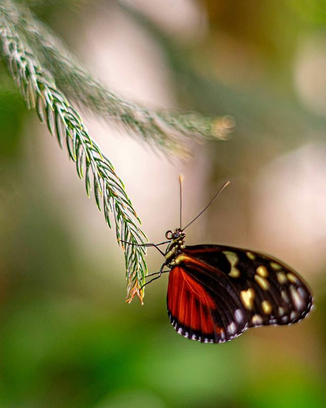 The butterfly counts not months but moments, and has time enough. -Rabindranath Tagore  ________________  #ontario #canada #depthofearth #earth_shotz #bns_earth #CanadianCreatives #ilovemississauga  #awesome_earth #ig_shotz #igbest_shotz#ig_amazingnature… https://ift.tt/3b7yDOo pic.twitter.com/vGNikXUWq4