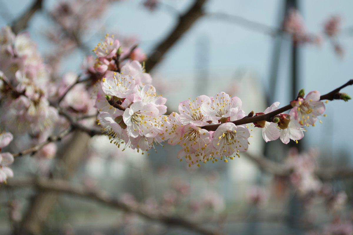 EVENEMENT | Bomen zijn belangrijk voor mens en dier. Op zondag 9 februari wordt Toe Bisjvat gevierd. Dit is het joods nieuwjaar voor de bomen.  We vieren het samen met de @HortusAmsterdam en gaan daar eerst oa op bomenontdekkingstocht.  Info & programma: https://t.co/O0qPmCkr1V https://t.co/9gRAJ1cBHJ