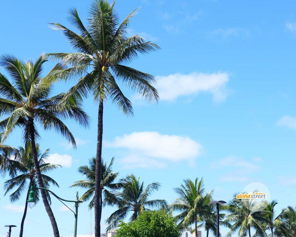 アロハストリート On Twitter 今週のハワイの壁紙 南国の風に吹かれ