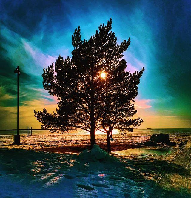 Reposting @kaikela: - via @Crowdfire  A tree and a lamp post by the sea in April. - #landscapes #tree #trees #maisema #photoofday #picoftheday #nature #photography #oulu #naturephotography #travel #love #landscape #instagood #beautiful #naturelovers #sky #sunset #photo #art #igpic.twitter.com/u07faZljdu