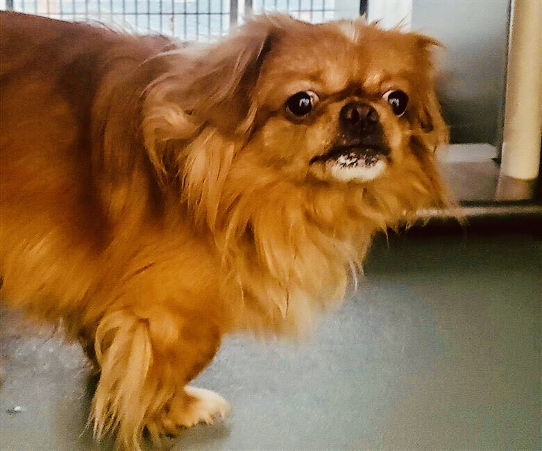 HIS OWNER LEFT PRADA TO DIE Saturday claiming he was often moody, aggressive. In fact he arrived with matted hair and uncut nails, having been left alone for most of 7 years. Save 13-lb Prada #84925 with pledges via @TomJumboGrumbo PLEASE RT PRADA!  https:// newhope.shelterbuddy.com/Animal/Profile /Index/99e53d72-b265-4533-a08b-830443832968  … <br>http://pic.twitter.com/RvSKTyuVDR