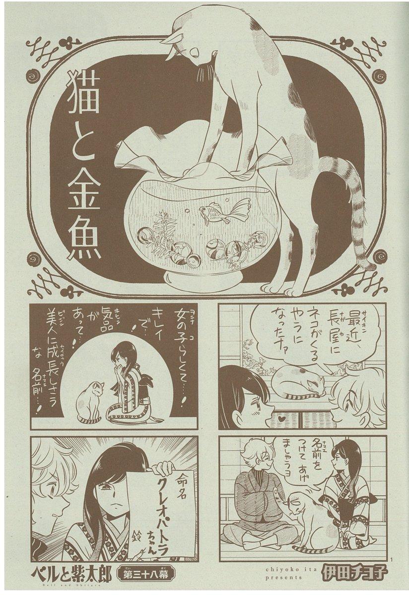 【#ベルと紫太郎】最近、長屋にメス猫がやって来る。これ以上ない女の子らしい名前をつけた彼女に、ベルはもう首ったけ!さらに紫太郎が金魚を買って四人家族になりました(?)#伊田チヨ子 #月刊ASUKA3月号試し読みはこちら↓↓