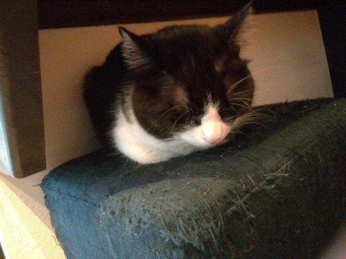 令和2年2月2日(日)毎月2日は猫好きが集まり猫についてのプチ勉強会とランチ会しております今回は第31回猫端会議&日本猫ねこ協会設立1周年記念交流会となってまして会場は谷中の保護猫☆宿木カフェです すご―い楽しみ😻#猫端会議 #むすびより