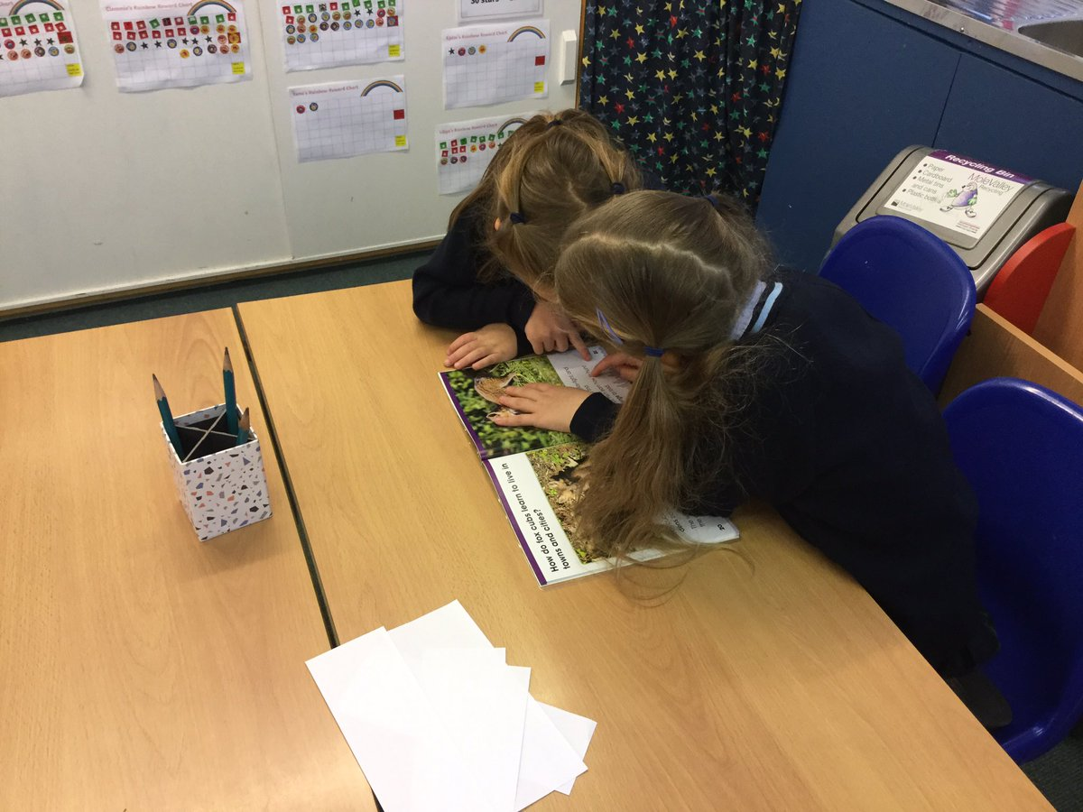 Year 1 girls using non-fiction books to find fox facts. Busy doing independent research #CreativeAndCollaborative