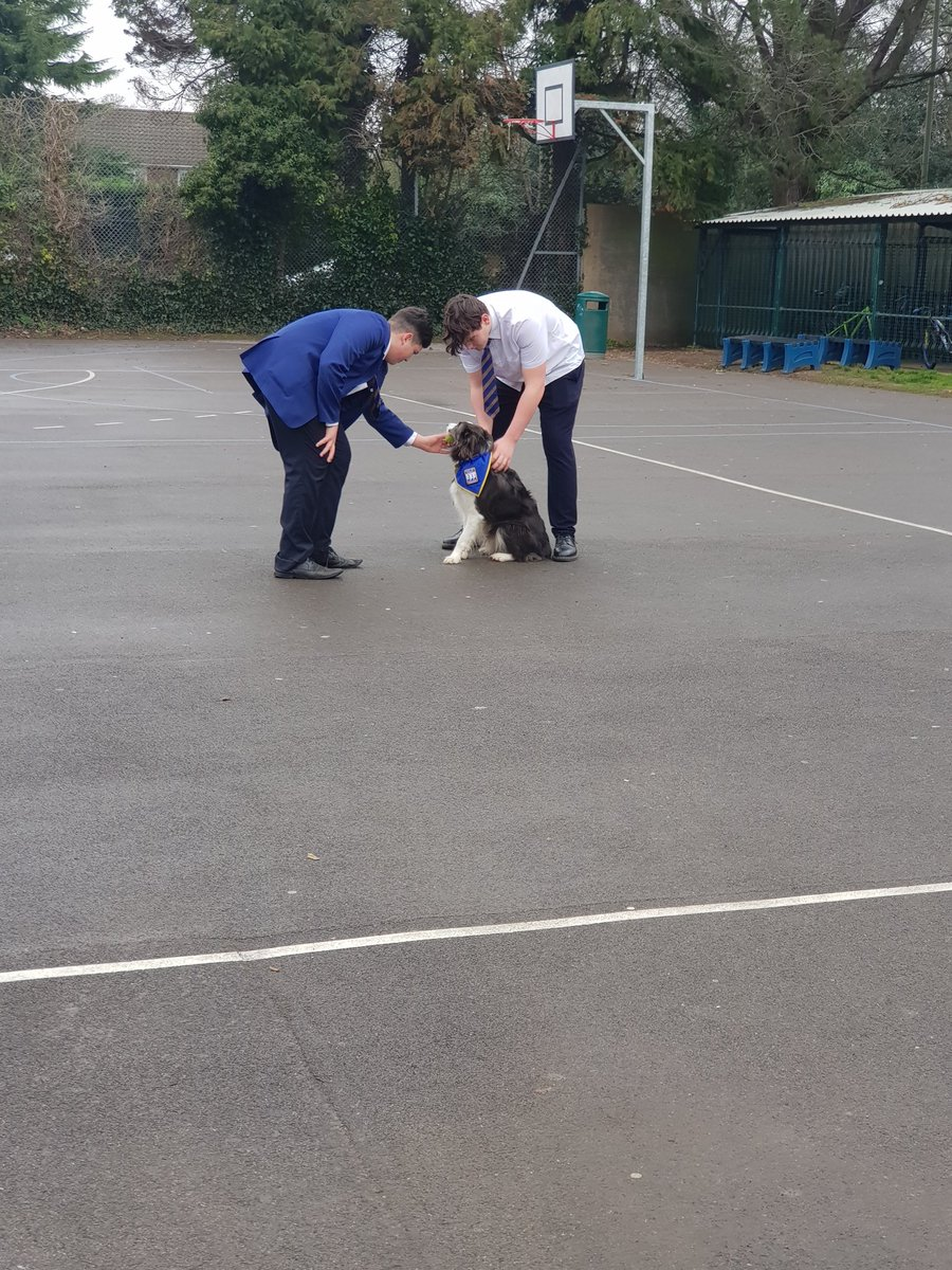 Never have we been more pleased to see Barney(& Anne of course) in school on an extra visit this morning. The impact he had was amazing. If you havent got a #evenbetterthanaschooldog you really should think about it. Contact @PetsAsTherapyUK #CamsAndProud